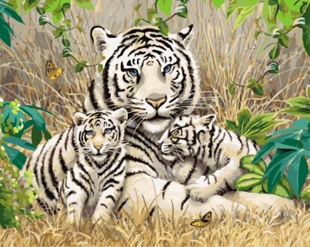 Картина по номерам (40х50см) Цветной GX7810 Белые тигры