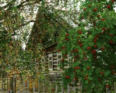Картина по номерам (40х50см) Цветной GX8887 Деревня