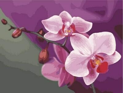 Картина по номерам (40х50см) Цветной MG1081 Розовые орхидеи