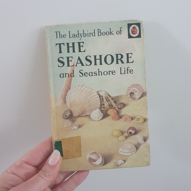 The Seashore and Seashore Life - Beach