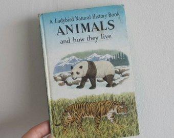 Animals Notebook - panda