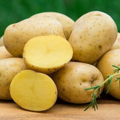 Golden Potato, 2lbs