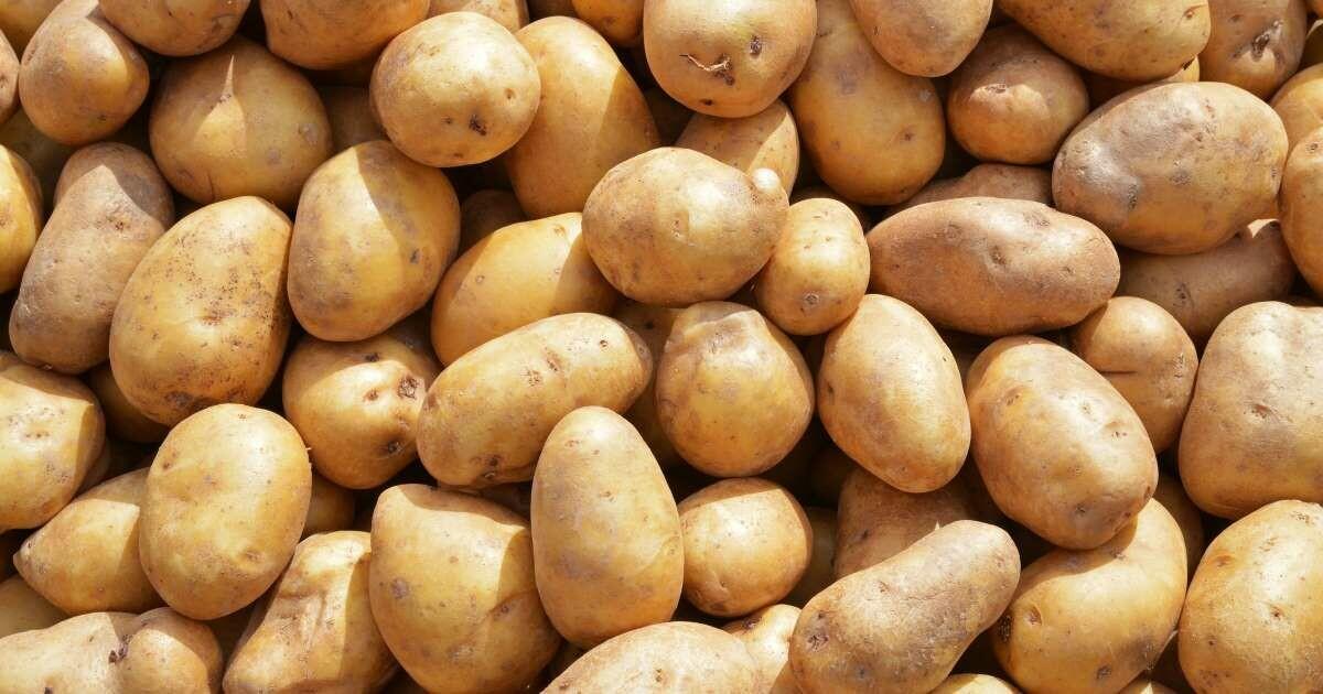 Idaho Potato, 5 lbs bag