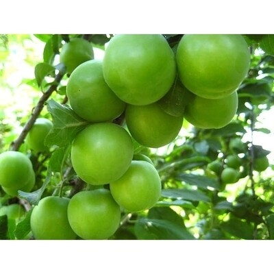 Can Erigi ~ Yesil Erik ~ Green Sour Plum -  ~2lbs
