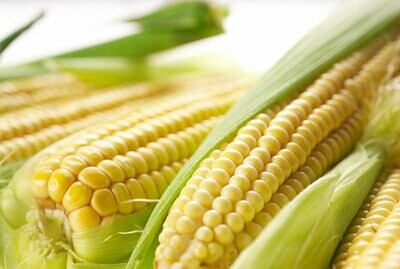 Fresh Sweet Corn (Sut Misir) 4 pcs with cover