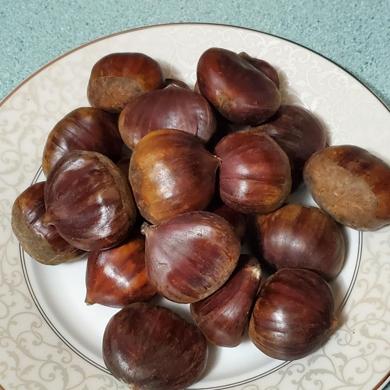 Turkish Chestnut 🌰 Turk kestanesi ~2lbs Kestane