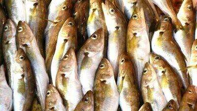 Mezgit Fileto 500gr (Haddock Fillet)