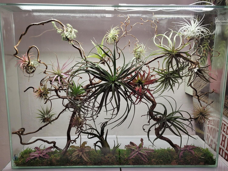 Florapanel liggend/60x80x10cm/excl. kweeklampen en voet