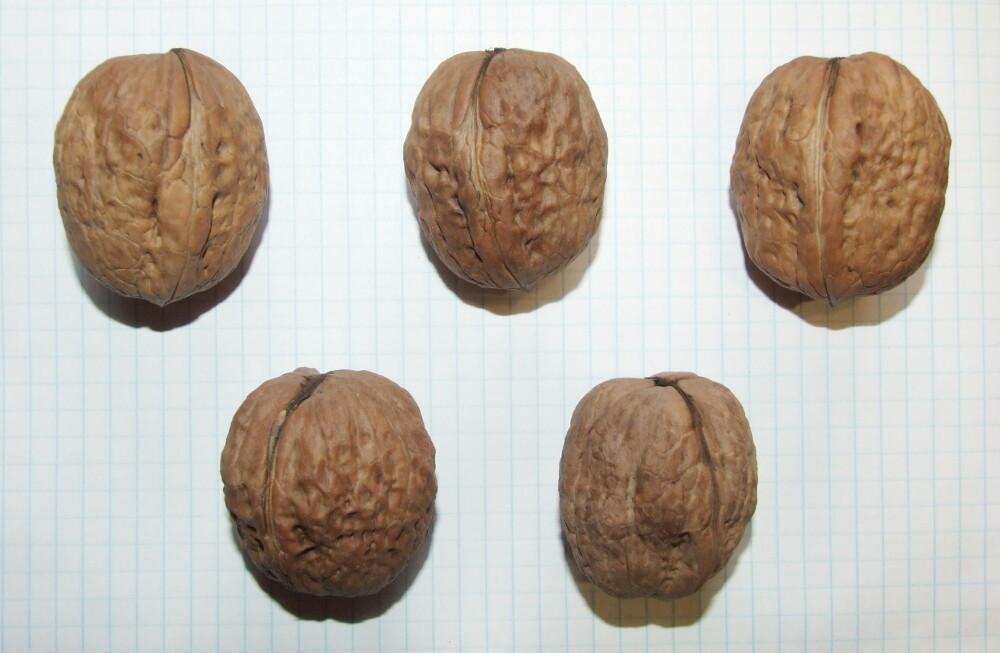"Семена грецкого ореха ""Крепыш"""