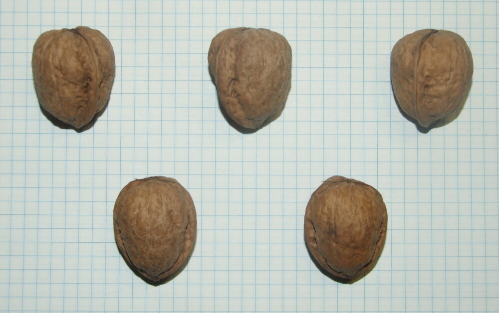 "Семена грецкого ореха ""Кристалл"""