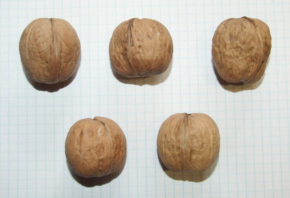 """Семена грецкого ореха """"скроплодный Левина"""""""