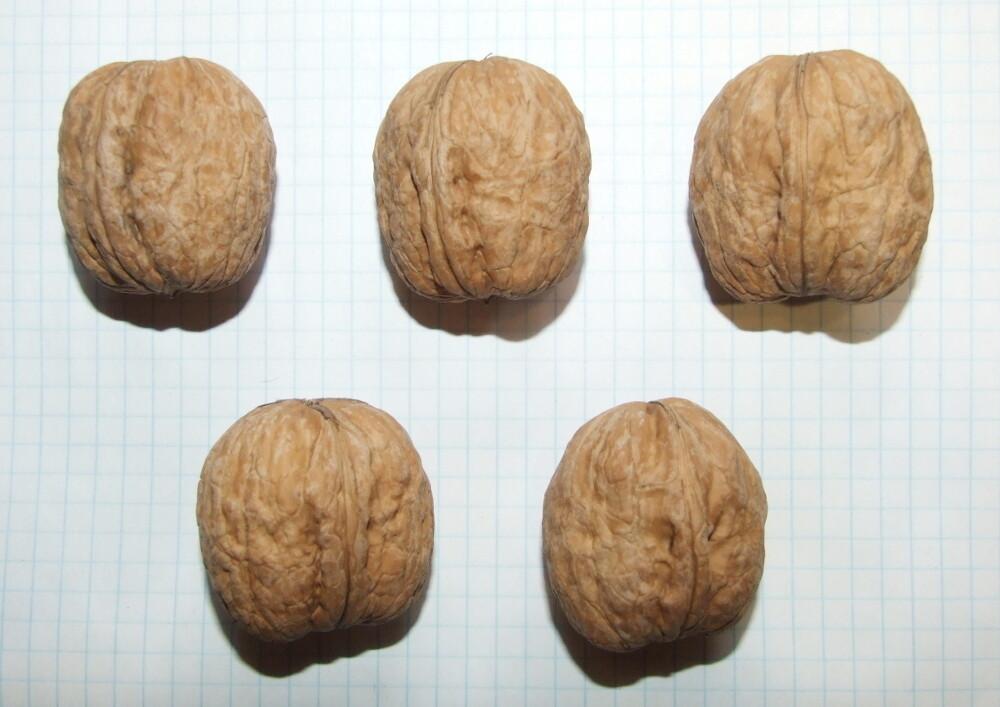 """Семена грецкого ореха """"гибридный Идеал"""""""