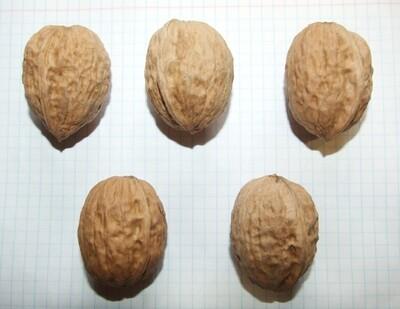 """Семена грецкого ореха """"Тонкокорый"""""""