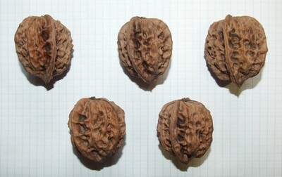 Семена грецкого ореха гибридного