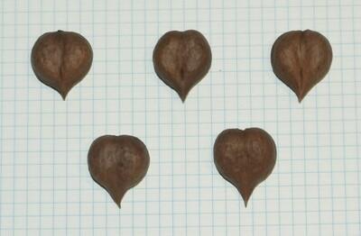 """Семена ореха сердцевидного """"типичный ЦФО сердечком"""""""