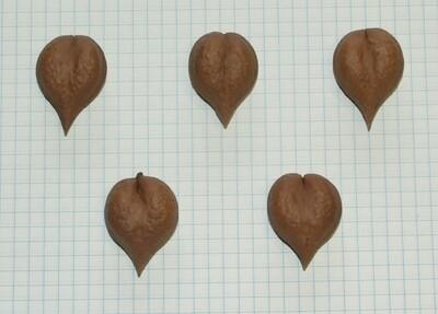 Семена ореха сердцевидного