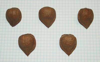 Семена ореха сердцевидного гибридного