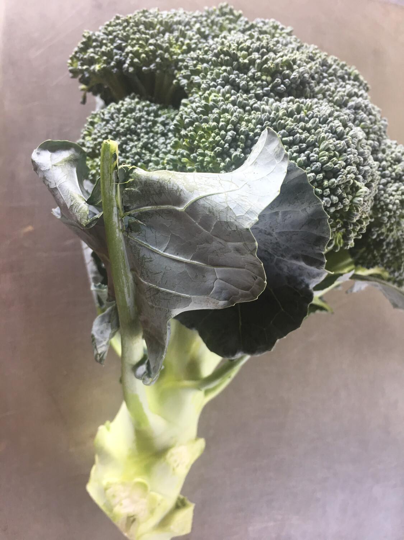 Ray's Greenhouse broccoli PP