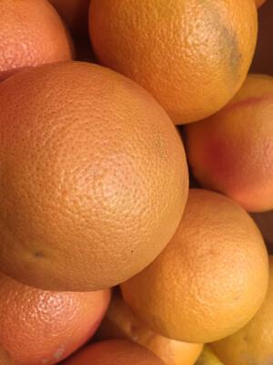 Organic red Grapefruit (5 count)