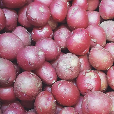Lancaster Farm Fresh organic red medium size potatoes (two pounds)