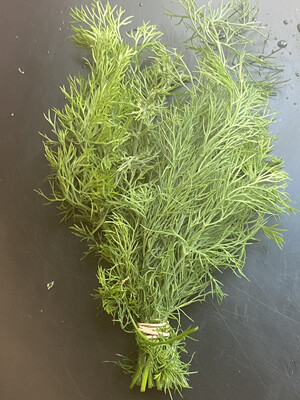 Pickle Penny Patch Organic dill bunch PP