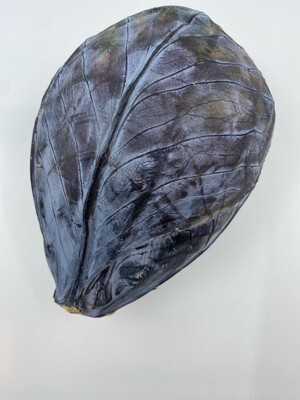 red cabbage Organic