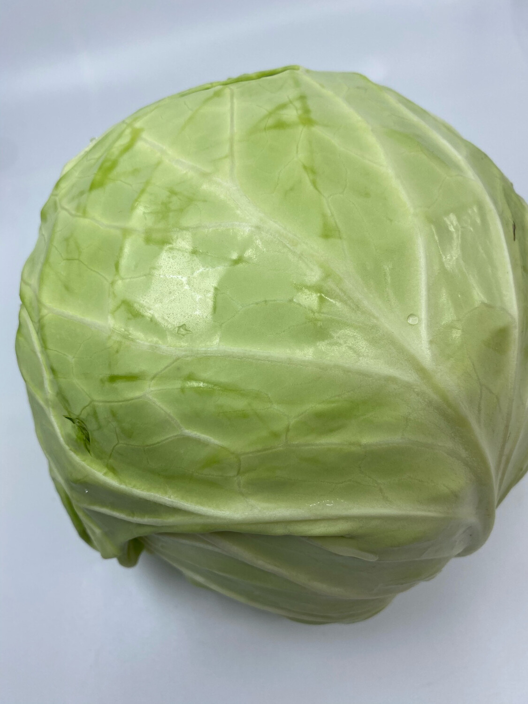 green cabbage head Organic