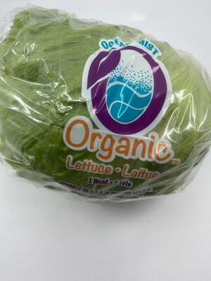 Iceberg Lettuce head OG