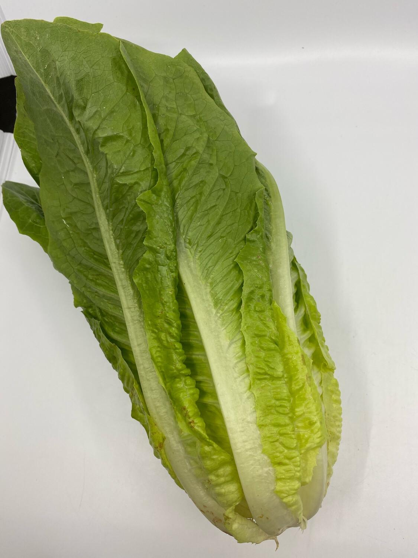 OG romaine lettuce head