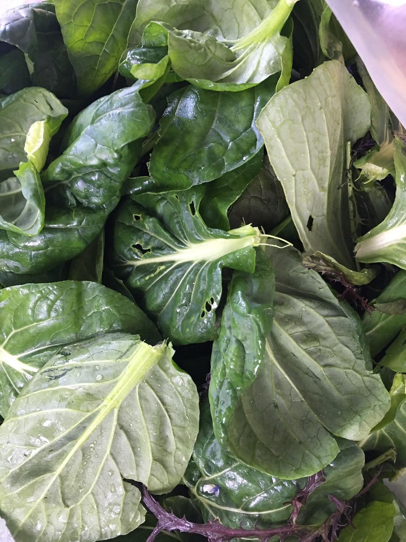 Jett's Produce lettuce mix