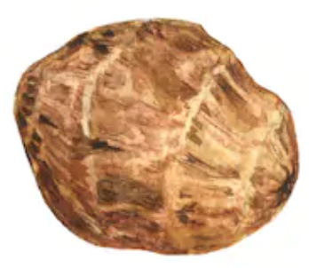 Tigernut