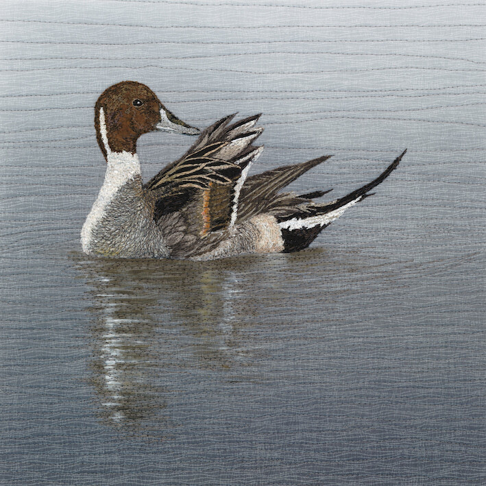 'On Reflection' Pintail - Limited Edition Giclee Print