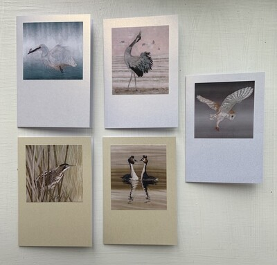 Somerset Levels Card Set 8 - Assorted (Pack of 5)