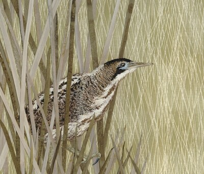 'On a Mission' Bittern - Limited Edition Giclee Print