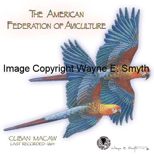 Cuban Macaws in Flight - Ceramic Tiles