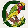 #19 Edward's  Fig Parrot - CITES Pins