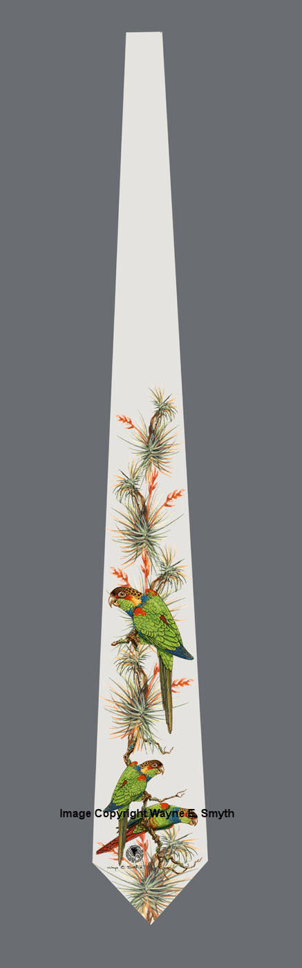 Blue Throated Conures - Neckties