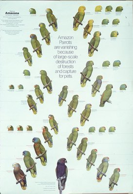 Amazons - Posters
