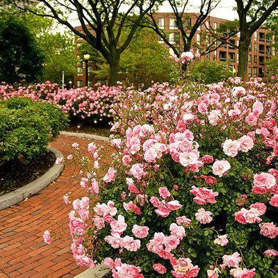 Rose Garden Level
