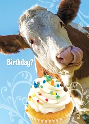 FR4733   Birthday Card