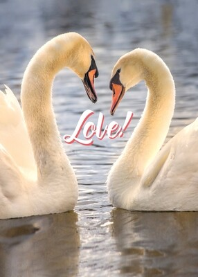 VPS16047 Valentine's Day Card
