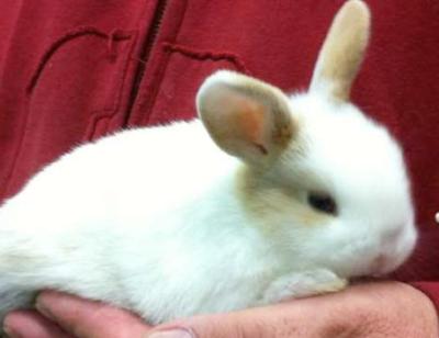 Beit Singer Animal Adoption - Rabbit