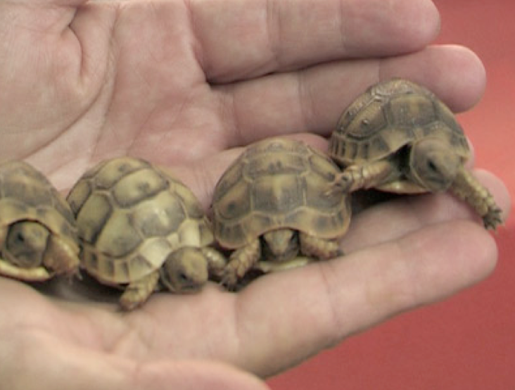 Beit Singer Animal Adoption - Turtle