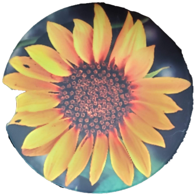 Sunflower Sandstone Car Coaster - Set of Two