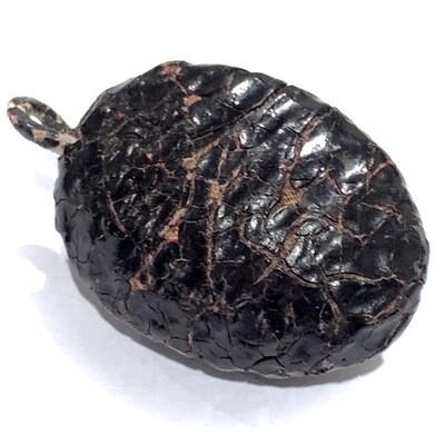 Bia Gae Thak Chueak Long Rak Huang Diaw Ancient Cowrie Shell Amulet Luang Phu Rod Wat Nai Rong Free EMS