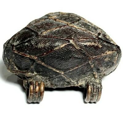 Bia Gae  Sorng Huang Thak Chueak Takhai Paetch Long Rak Ancient Cowrie Shell Amulet Luang Phu Rod Wat Nai Rong FREE Express shipping