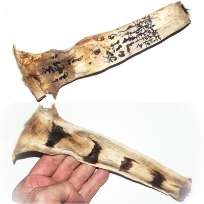 Hang Suea Tiger Tail with Sacred Khom Agkhara Inscriptions 9 Inches - Luang Por Phern Wat Bang Pra
