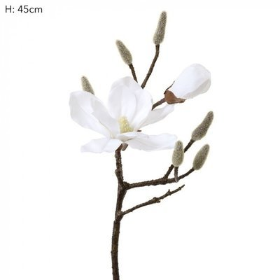 Magnolia Spray White