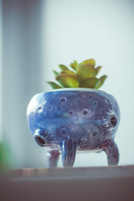 Cosmic ceramic planter, indoor planter for succulent