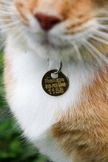 Médaille pour chat non stérilisé